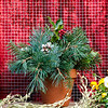 #12 Terra Cotta Clay Pot - Fresh Greens