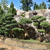 Bonsai Trees against Rocks