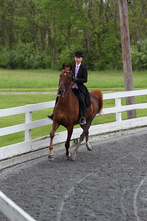Tammy - Keystone Classic Horse Show