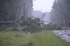 Hwy 144 Presbyterian Tree 2