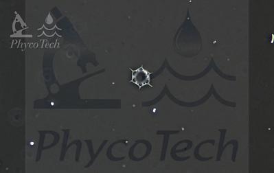 Dictyocha