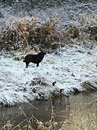 2017 January -Dogs/Ponds/Snow