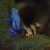 NorwalkAquarium02052017frogs