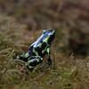NorwalkAquarium02052017frogs2
