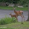Deer07232017
