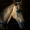 JNEWS_0709_Therepy_Horses_01.JPG