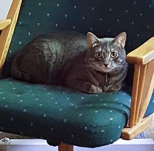 B.B. chillin' on a chair