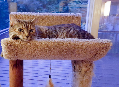 Missy Cat on her favorite perch.