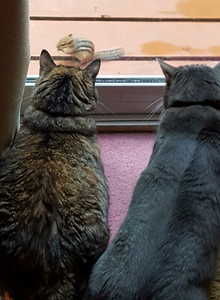 Missy Cat and B.B. being teased by a chipmunk