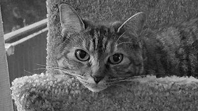 Missy Cat closeup