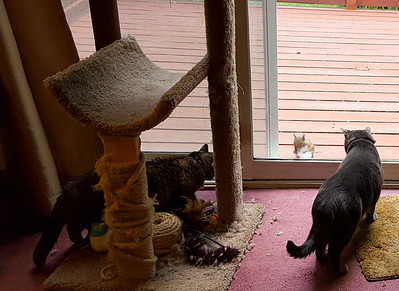 Squirrel Teasing  B.B. and Missy Cat. He knocked on the glass door.