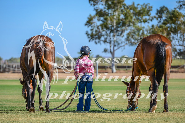 2017 KARC Working Horse