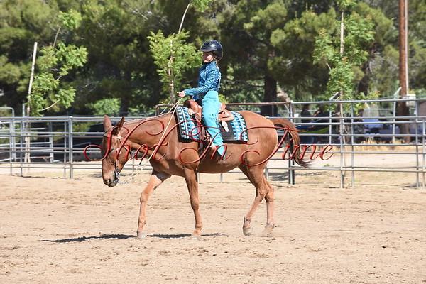 Mule Western Classes