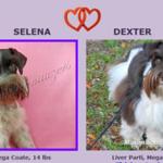 Selena & Dexter Puppies, DOB 3/13/2017