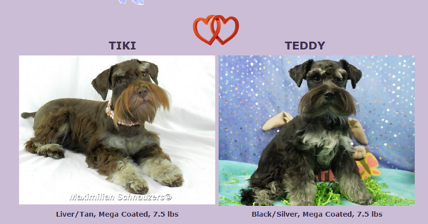 Tiki & Teddy's Edgar, DOB 10/31/2017