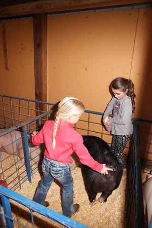 2017 Local Livestock show