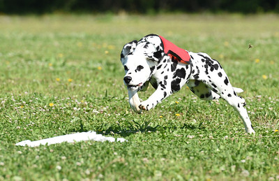 2017 Lure Coursing