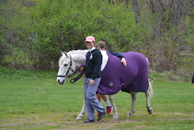 Annabelle Gray_Buddy the Pony_Londonderry VT