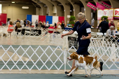 1/RW      19ROCKET OVR T'POINT POLLACK , SR87994908 6/8/2015. Breeder: Jodi Pollack. By CH Vict'rys Banner Over T'Point JH -- Pollacks Sassy Girl JH. Nancy and Marty Noble . Dog. Dakota Anderson, Agent.