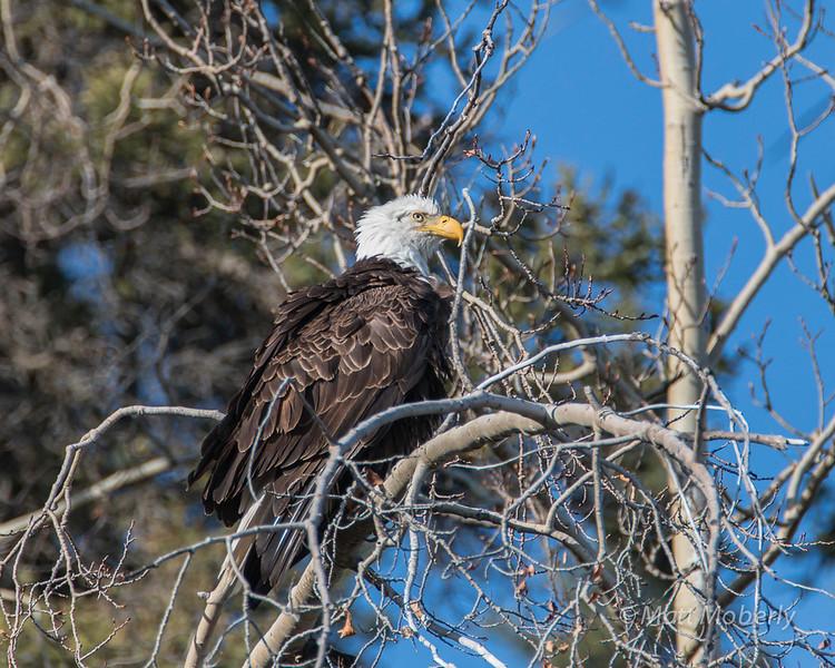 Eagle, Yukon Territories