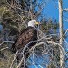Eagle, Yukon Territories
