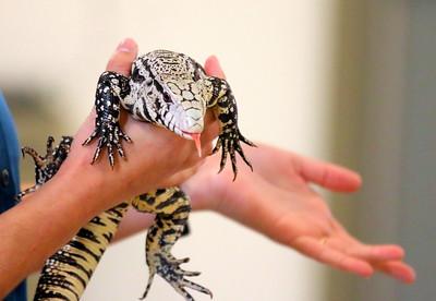 IMG_5005 Tegu lizard held by swaan
