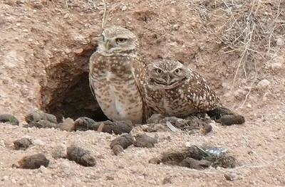 2017 OWLS
