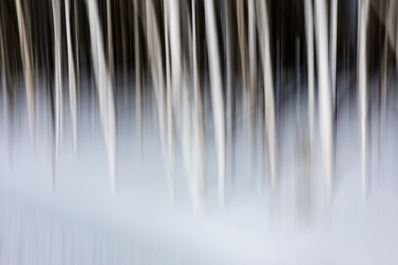 Shiretoko National Park, Hokkaido, Japan. An abstract image of a birch forest standing in a blanket of snow.  The type of image is creating by moving the camera during a fairly long exposure period.