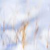 JudithBakerMontano_Wk3_Contemplative_SnowGrass3.jpg