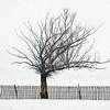 JudithBakerMontano_Wk3_Contemplative_SnowFence.jpg