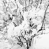 JudithBakerMontanoWk14_Soft_Snow.jpg