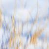 JudithBakerMontano_Wk3_Contemplative_SnowGrass.jpg