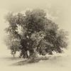 JudithBakerMontano_Wk30_Word2_Tree.jpg