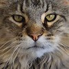 JudithBakerMontano_Wk27_Eyes_OscarPortrait.jpg