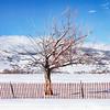 JudithBakerMontano_Wk3_Contemplative_SnowFence2.jpg
