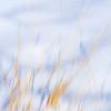 JudithBakerMontano_Wk3_Contemplative_SnowGrass2.jpg
