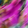 JudithBakerMontano_Wk2_Movement_OrchidSwirl.jpg
