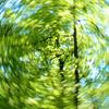 JudithBakerMontano_Wk16_Curves_TreeCanopy.jpg