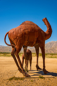 Camel metal sculptures at Anza-Borrego State Park in California