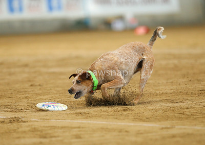 Canine Disc State Championships
