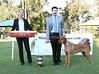 1  Best Exhibit In Show, Challenge Dog and Open In Show