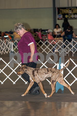 Feb 2017 Perry Dog Show