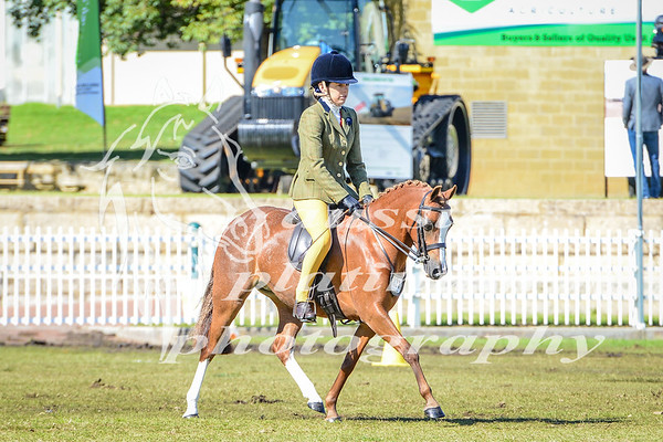 2017 Perth Royal Friday 29-9