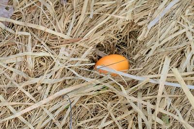 IMG_8934 egg in nest