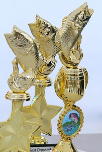 IMG_5601 trophies