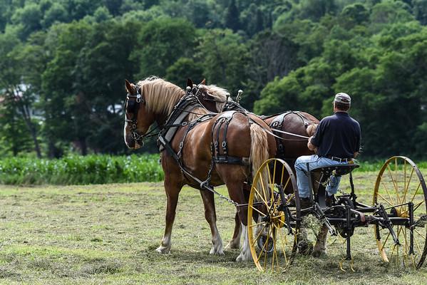 Billings Farm Hay Day