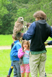 IMG_7030Torgun Sanders,6, looks at an owl presented by VINS,,by the pony pasture