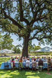 Vintner's Luncheon at St. Supéry Estate