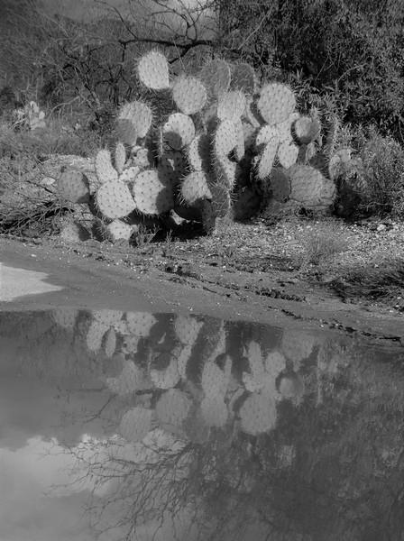 Saturday - Reflections