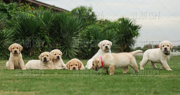 MORAN Puppies